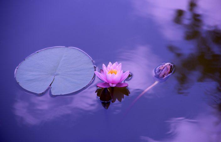meditation 102 lotus